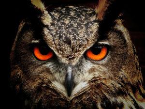 owl-conseils
